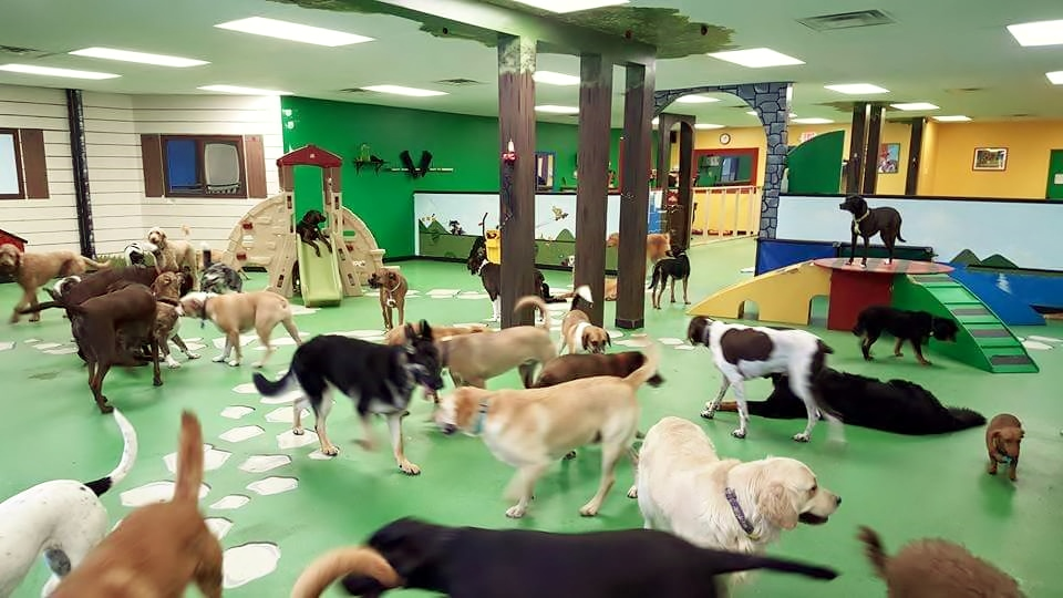 Is It Necessary to Leave Your Furry Child at a Dog Daycare?